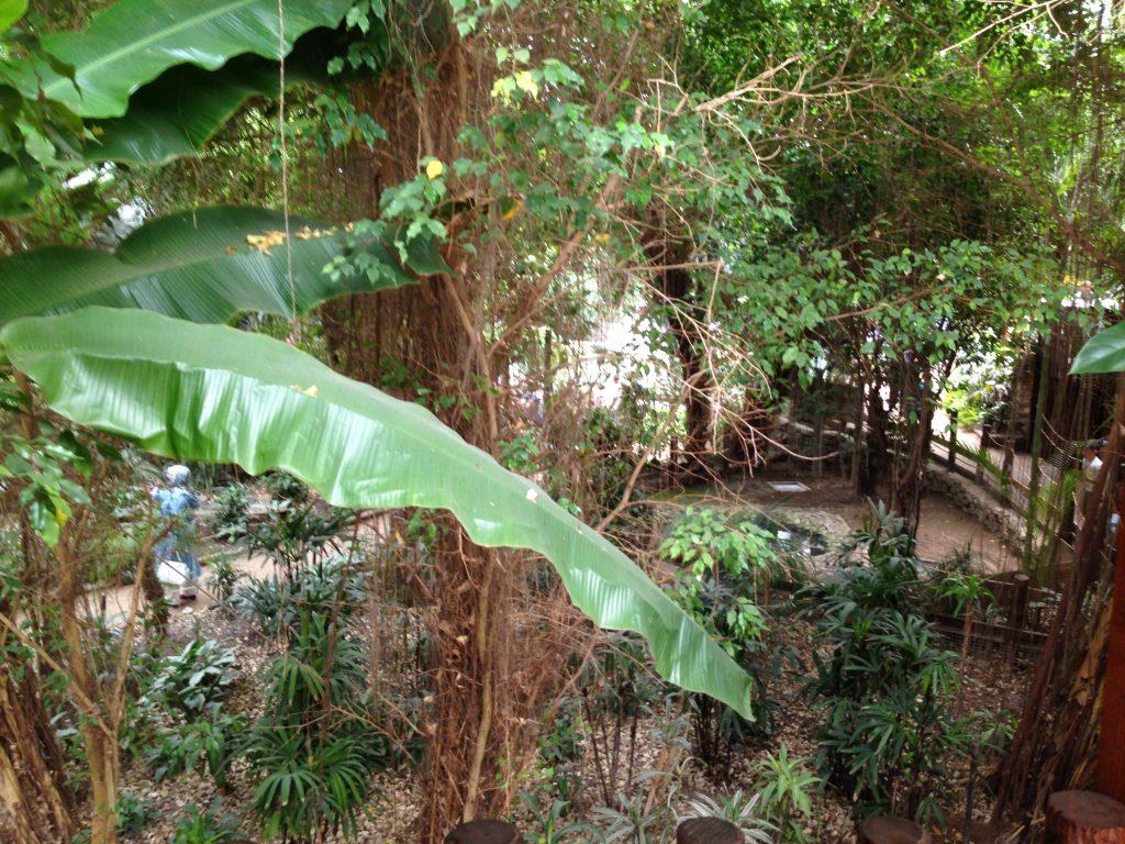 tropik alan